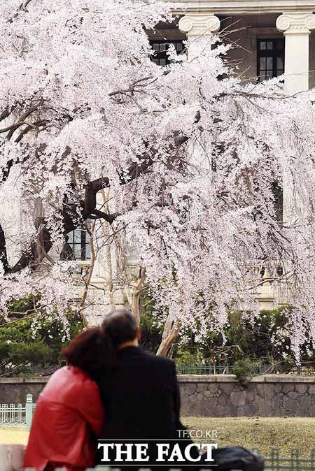 완연한 봄날씨를 보인 31일 오후 서울 중구 덕수궁을 찾은 시민들이 봄기운을 만끽하며 즐거운 시간을 보내고 있다. /이동률 기자