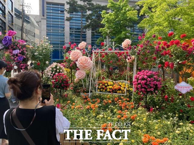 서울시국제정원박람회가 14일부터 20일까지 7일간 개최된다. 사진은 서울로 7017 중간에 있는 장미정원의 모습. /이진하 기자